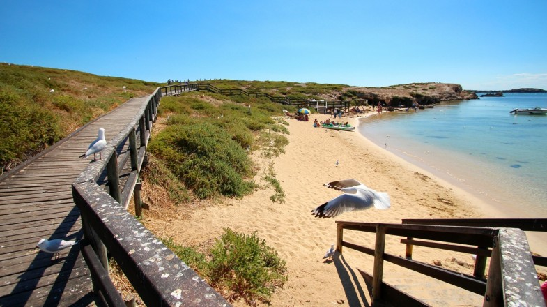 Perth has a lot of places to explore nature and wildlife. One such place is the Penguin Island.