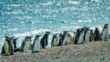 Puerto Madryn welcomes thousands of foreigners and tourists to enjoy its stunning beaches, explore its coastal landscapes, and experience a one-of-a-kind marine