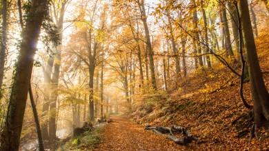 Rheinsteig is a famous hiking trail in Germany