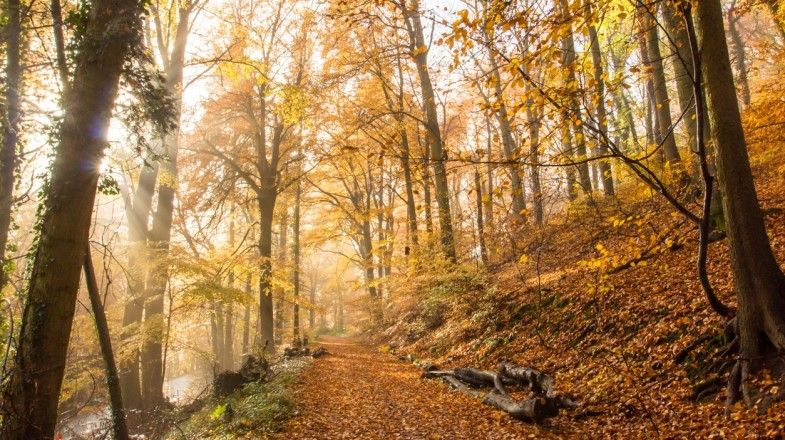 Rheinsteig is a famous hiking trail in Germany