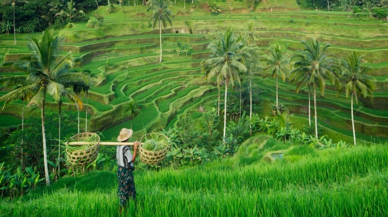 Visiting the popular rice terraces in Tegallalang is a fun thing to do in Ubud.