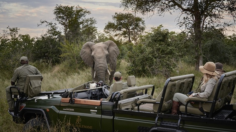 South Africa is already acclaimed for safaris but a luxurious safari in South Africa is the crème de la crème of safari opportunities.