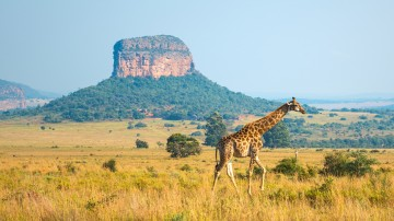 When in South Africa, it is a must that you add wildlife safari in your South Africa itinerary as it is the top destination with diverse flora and fauna.