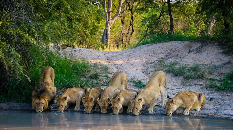 South Africa is one of the continent's pre-eminent safari destinations, and while catching sight of some of Africa's most distinctive wildlife in its natural habit