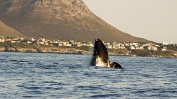 From eco-tours, self-guided treks and hikes, whale-watching, to bungee jumping and rock climbing, there are many things to do in Garden Route National Park.