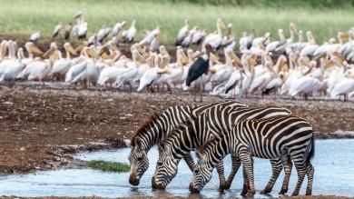 Bookmundi presents the top things to do in Lake Manyara National Park