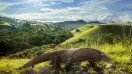 Watching the Komodo dragons is the reason for visiting the Komodo Island