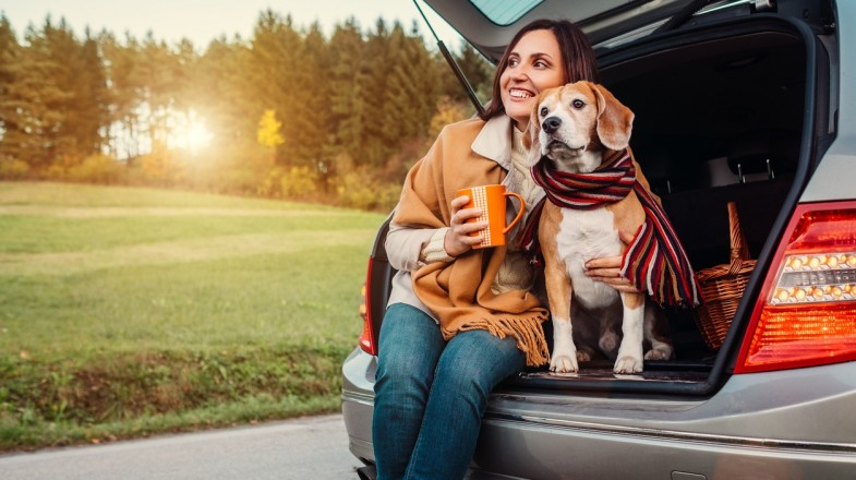 Some useful tips can make traveling with pets a simple task.