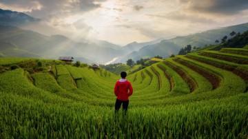 A trekker gazes over the green terraced rice paddies of Sapa.