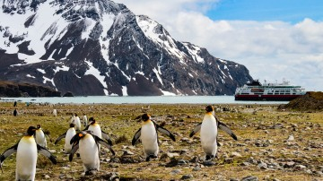 Penguins gather on the tundra as an Antarctic cruise ship passes by.