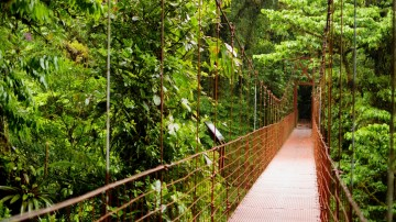 Include a visit to Monteverde Cloud Forest Reserve on a two-week Costa Rica itinerary