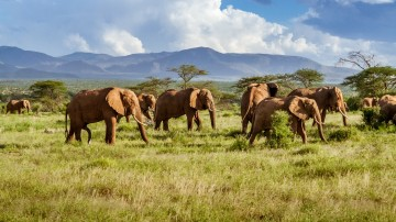 Winter in South Africa brings milder temperature, smaller crowds and cheaper rates making it a perfect time for safari.