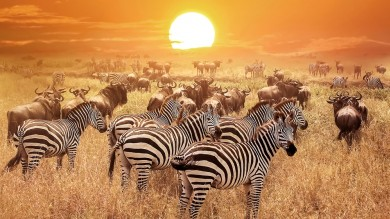 If you love watching the Big 5 on Animal Planet, you cannot suffice without a trip to Africa.