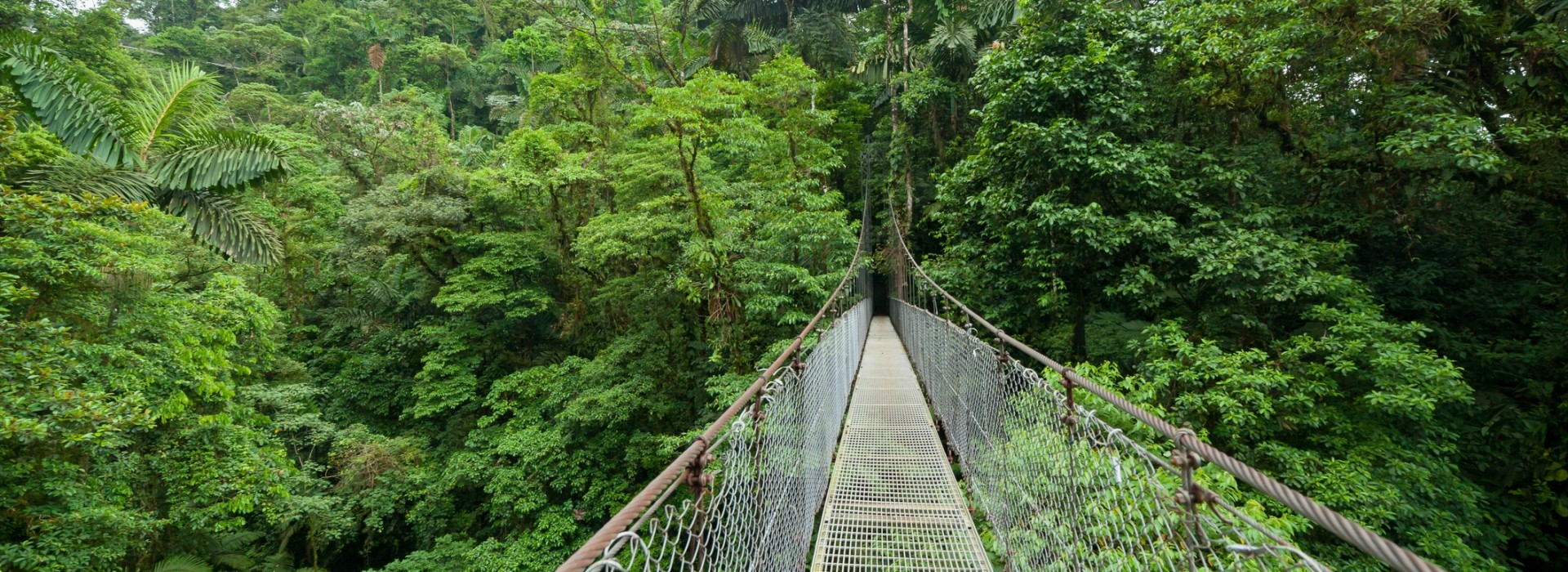 Walk the Sky Bridge in Monteverde and view the rainforest from a different angle.