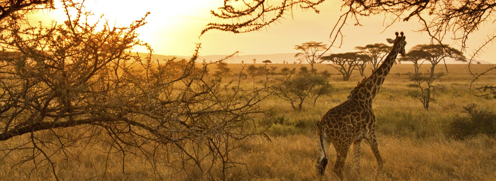 Serengeti National Park >> Safari In Serengeti National Park In Tanzania Bookmundi Com