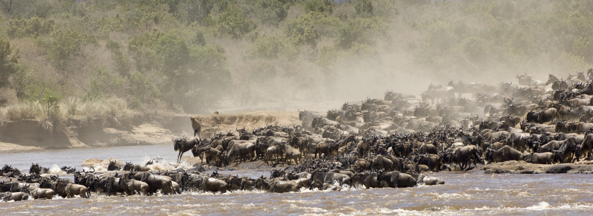 The great migration in the Serengeti National Park