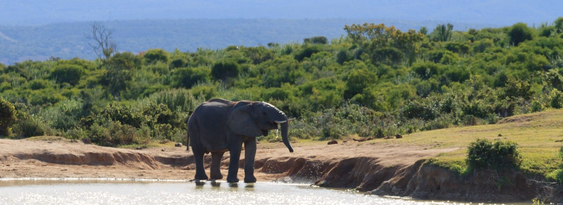 Addo Elephant National Park Tours