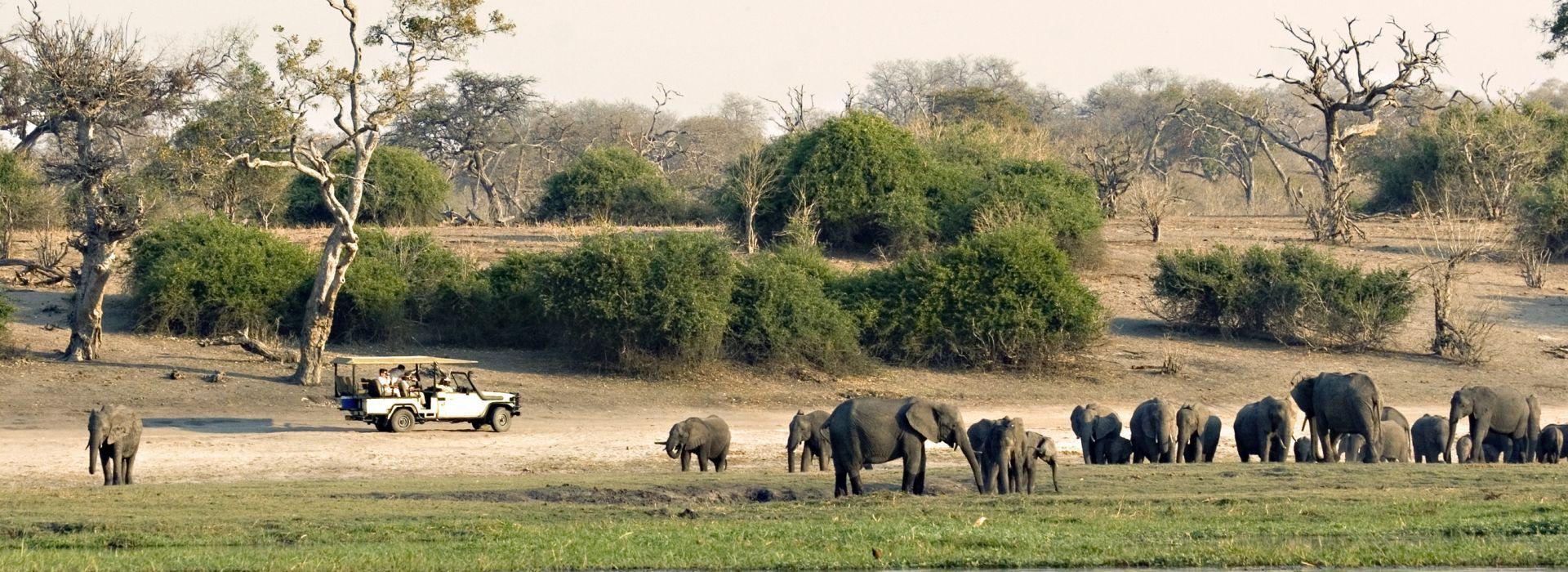 Boat tours, water sports and marine wildlife in Botswana
