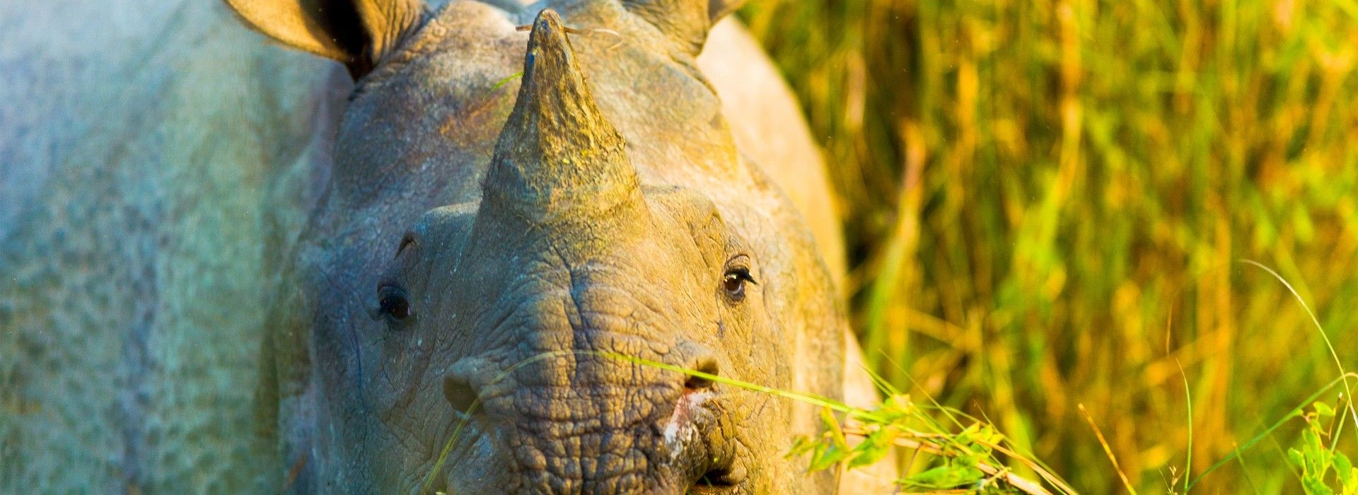 Chitwan National Park Tours