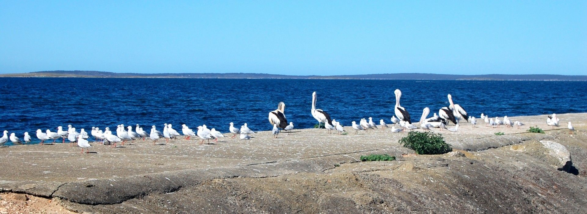 Eyre Peninsula is an oceanic paradise famous for its rich sea life, biodiversity and countless adventure opportunities.