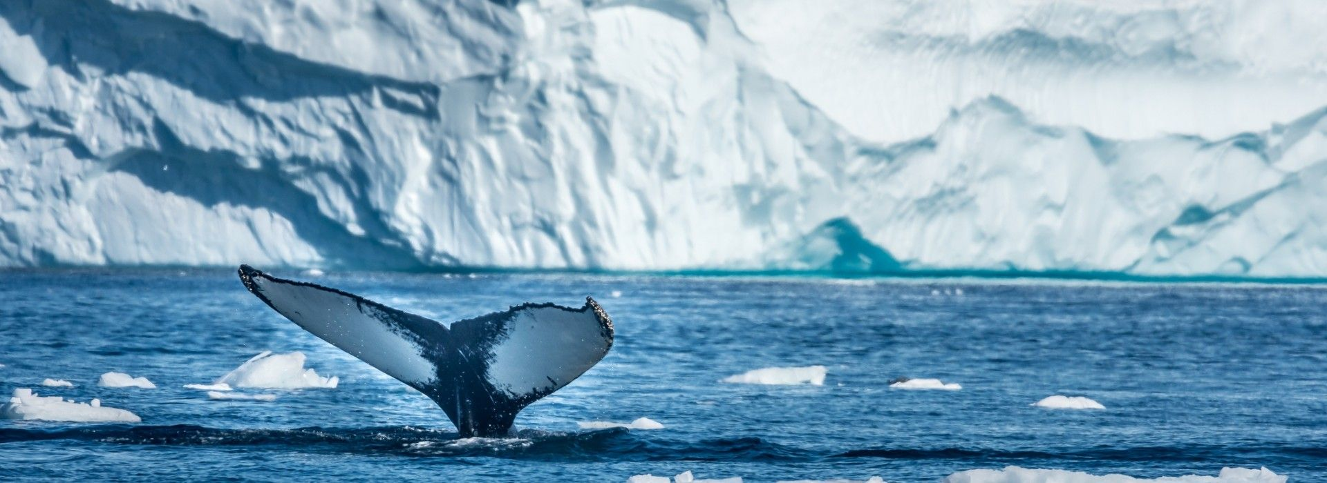 Greenland Tours and Vacation Packages