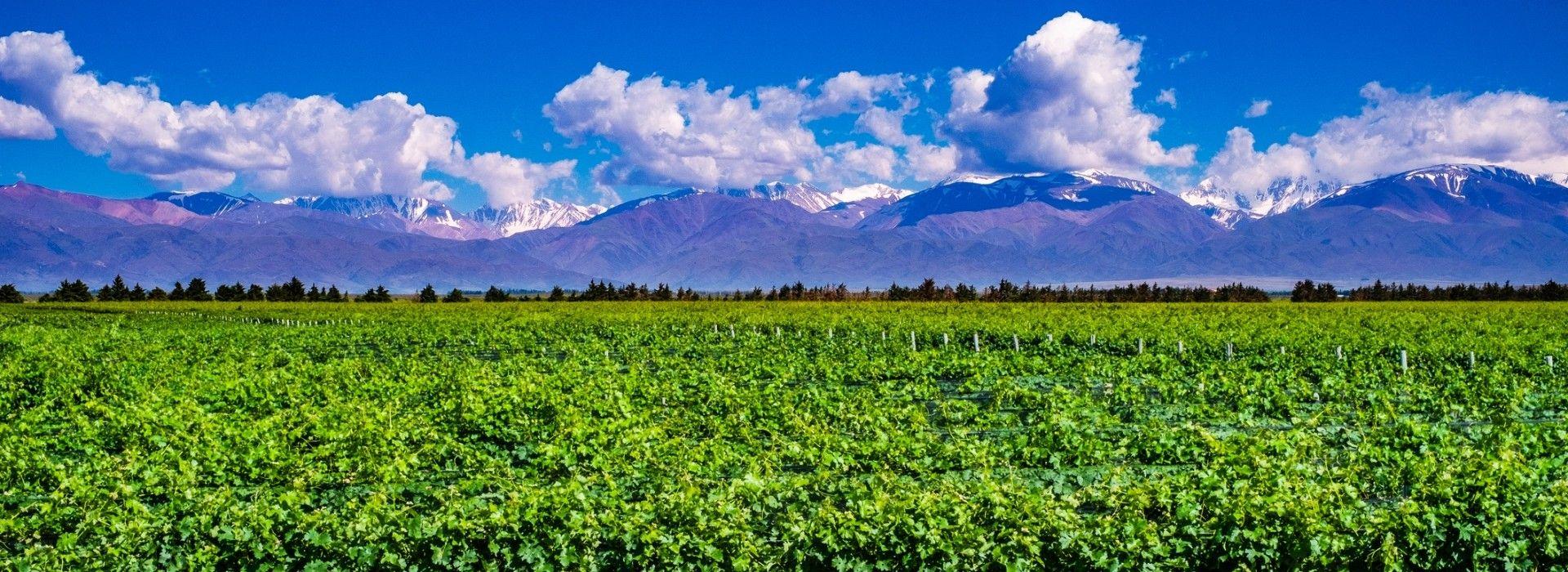 Mendoza Tours and Holidays 2019/2020