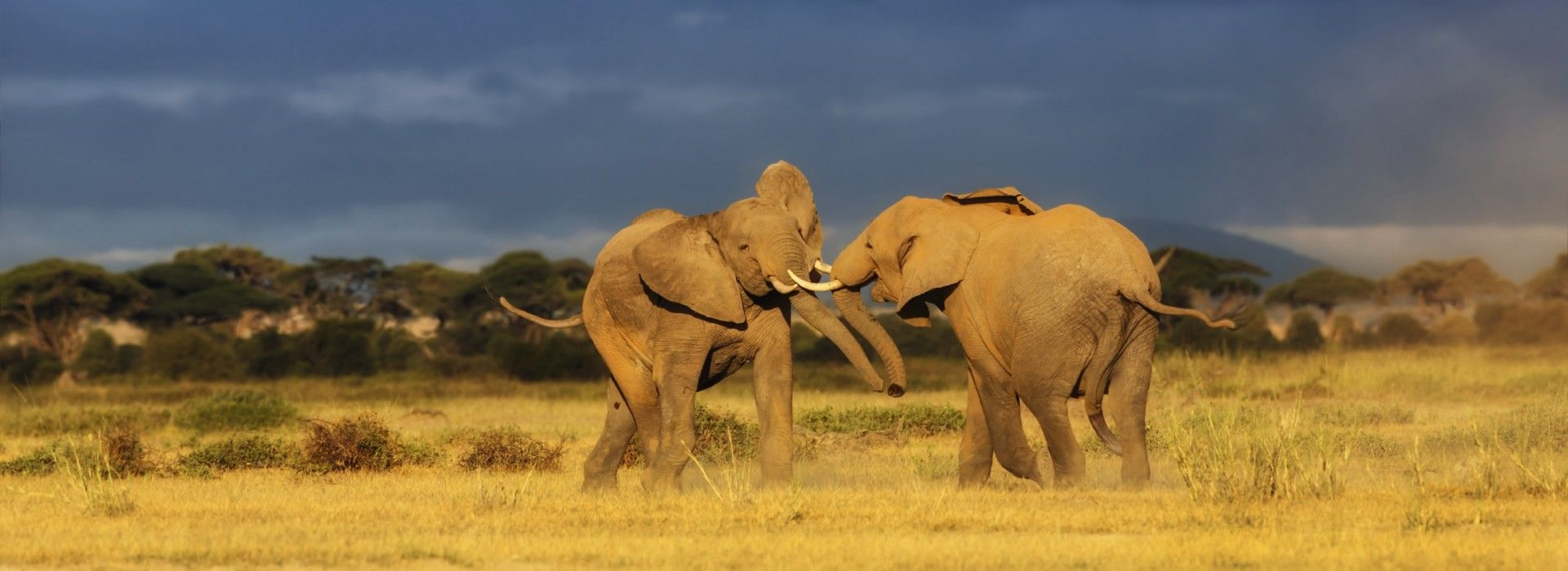 Safaris in Africa