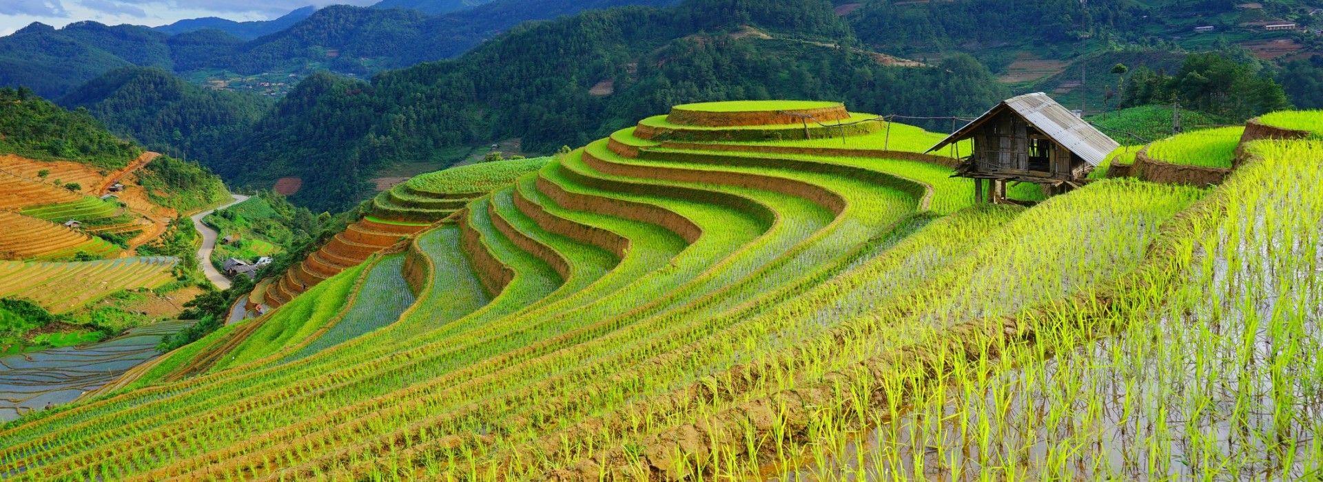Sapa treks, tours and trips takes you through lush paddy fields