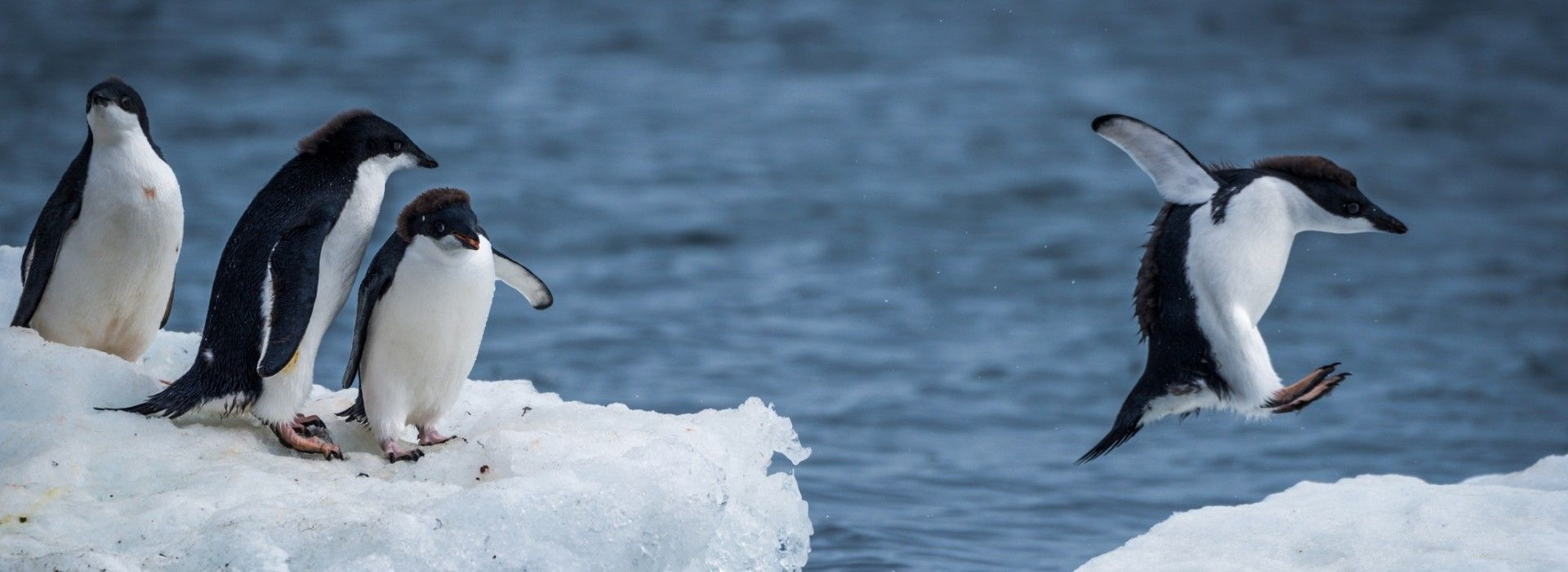 Special interests and hobbies Tours in Antarctica