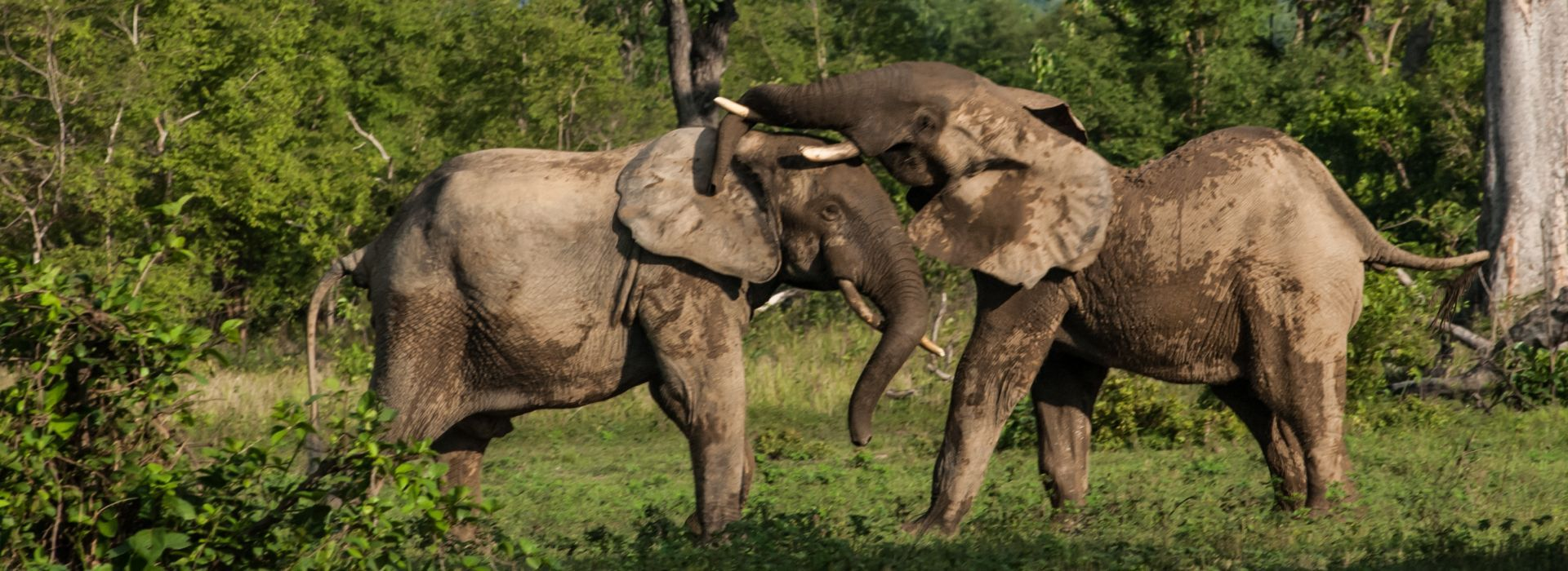 Wildlife, landscapes and nature Tours in Ghana