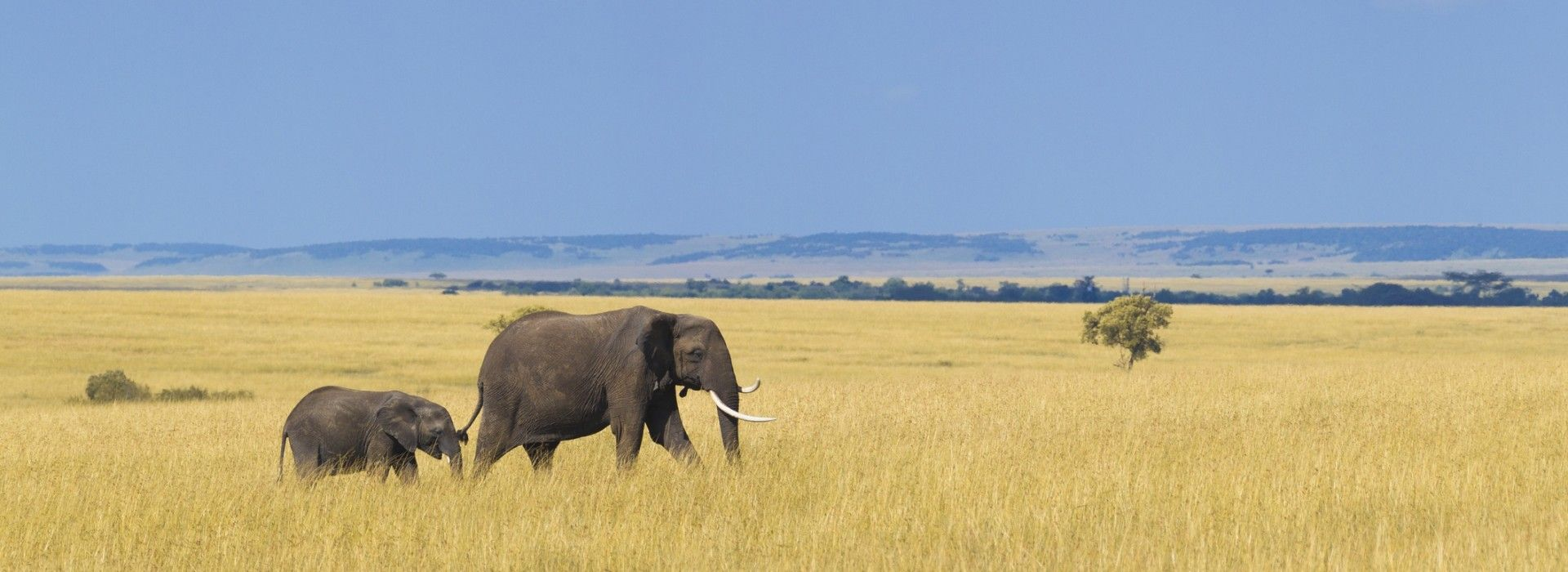 Wildlife, landscapes and nature Tours in Lilongwe