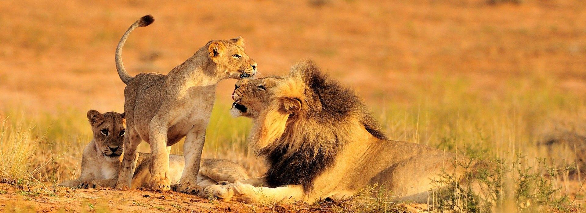 Wildlife safaris and game drives Tours in Pilanesberg National Park