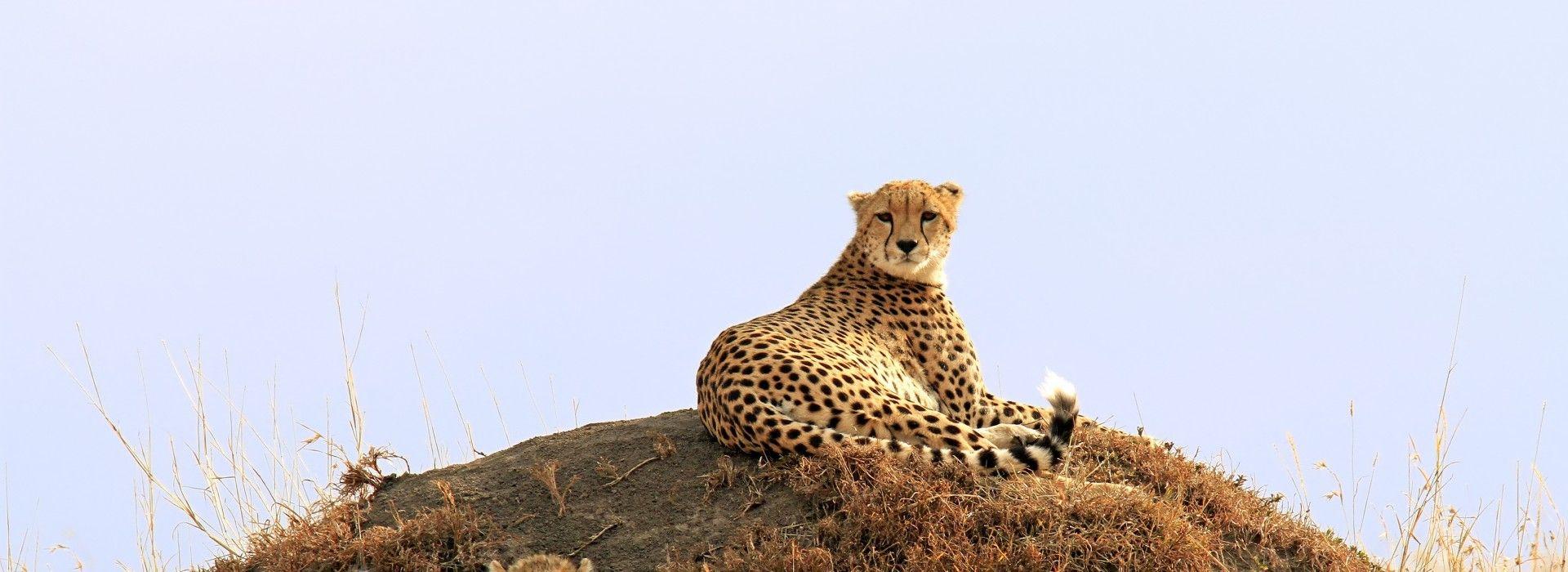 Wildlife safaris and game drives Tours in Samburu National Reserve