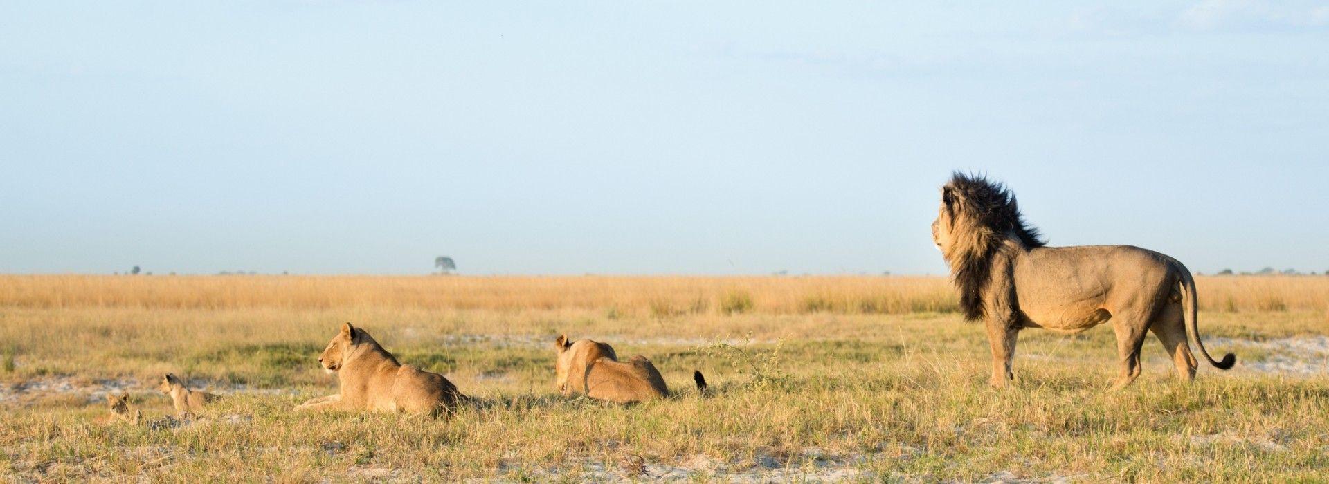 Wildlife safaris and game drives Tours in Zimbabwe