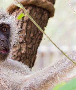 Pilanesberg National Park Tours