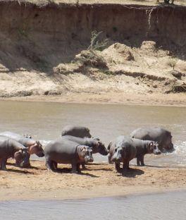 Lake Naivasha Tours