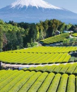 Mt Fuji Tours