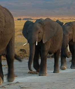 Tsavo East National Park Tours