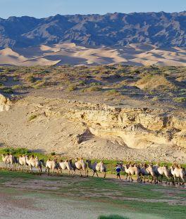 South Gobi Tours