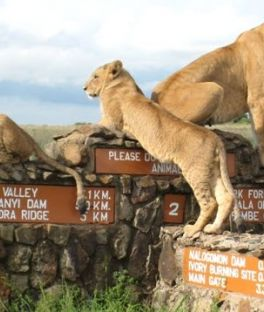 Nairobi Tours