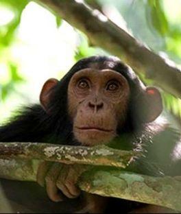 Bwindi Impenetrable National Park Tours