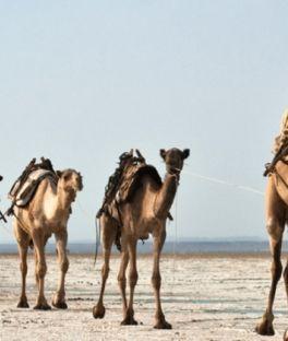 Djibouti Tours