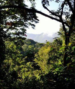 Kalinzu Forest Reserve Tours