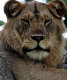 Kibale Forest National Park Tours