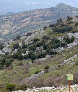 Córdoba Tours