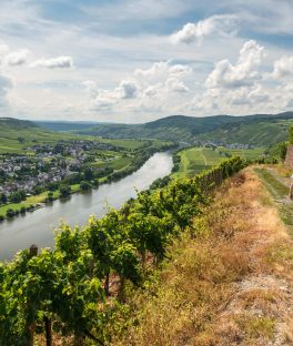 Moselle Valley Tours