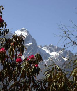 Kanchenjunga Base Camp Tours