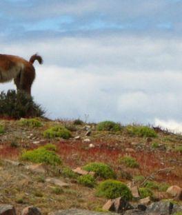 Torres del Paine National Park Tours