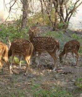 Ranthambore National Park Tours
