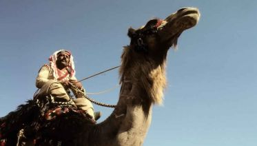 1-Day Camel Safari To White Canyon